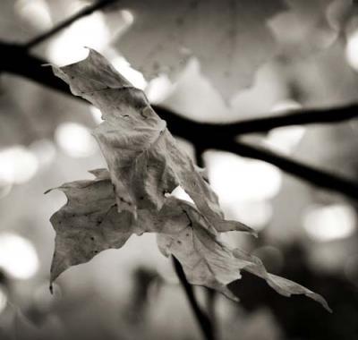 Outono...